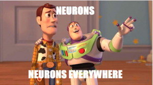 Toys_neurons